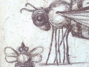 Insect - detail of drawing